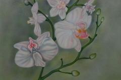 Orchidee-op-hout 50x60 cm