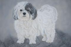 Boomer-hond-Bobby op Doek 40x50 cm