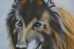 Tervuerense-Herder-kay op Doek 30x40 cm